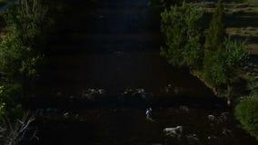 Tiro aéreo de un pescador de la mosca en el río metrajes