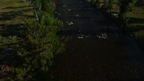 Tiro aéreo de un pescador de la mosca en el río almacen de metraje de vídeo