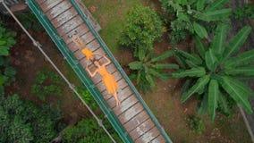Tiro aéreo de una mujer joven y de su pequeño hijo que ponen en puente colgante sobre las selvas Viaje a al sureste metrajes