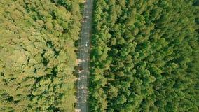 Tiro aéreo del abejón sobre el camino forestal El abejón vuela adelante sobre el camino, coches metrajes