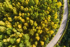 Tiro aéreo del rastro en bosque Foto de archivo