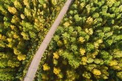 Tiro aéreo del rastro en bosque Foto de archivo libre de regalías