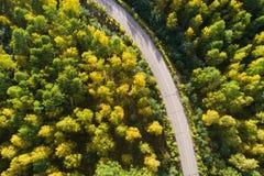Tiro aéreo del rastro en bosque Fotografía de archivo libre de regalías