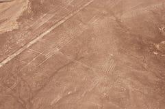 Tiro aéreo do colibri de Nazca Imagem de Stock