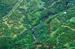 Tiro aéreo do console grande - floresta tropical Imagens de Stock Royalty Free