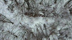 Tiro aéreo do desportista no revestimento amarelo que movimenta-se na floresta no dia de inverno frio filme