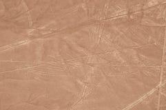Tiro aéreo do pássaro de Nazca Fotos de Stock