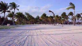 Tiro aéreo do zangão A câmera voa lentamente entre as palmas de coco Por do sol bonito na costa do mar das caraíbas filme