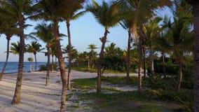 Tiro aéreo do zangão A câmera voa lentamente entre as palmas de coco Por do sol bonito na costa do mar das caraíbas vídeos de arquivo