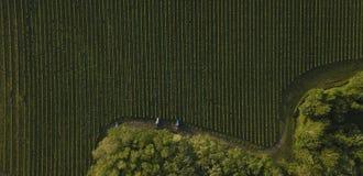 Tiro aéreo dos tratores de uma árvore que trabalham no vinhedo, Bordéus imagens de stock royalty free