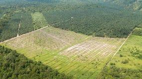 Tiro aéreo em Bornéu do óleo de palma e da plantação de borracha imagens de stock royalty free