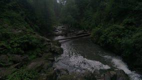 Tiro aéreo entre el río de la montaña y el bosque del cedro almacen de video