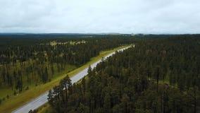 Tiro aéreo hermoso del fondo del bosque del Estado en los E.E.U.U. con los árboles verdes enormes y del camión de reparto que se  metrajes