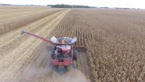 tiro aéreo 4k en el vehículo grande del tractor de la máquina del camión de la cosechadora de la agricultura que cosecha trigo or almacen de video
