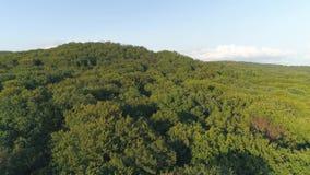 Tiro aéreo: Migrar sobre a floresta verde nas montanhas Carpathian vídeos de arquivo