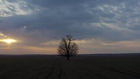 Tiro aéreo que está en órbita un árbol solitario almacen de video