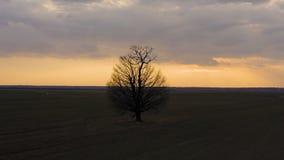Tiro aéreo que está en órbita un árbol solitario metrajes