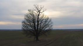 Tiro aéreo que está en órbita un árbol solitario en la puesta del sol almacen de metraje de vídeo