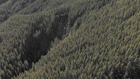 Tiro aéreo Un bosque con una enorme cantidad de pinos y de abetos verdes y de nubes bajas del montón Parque nacional de Teide, Te almacen de video