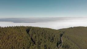 Tiro aéreo Un paisaje soñador con una enorme cantidad de pinos y de abetos verdes, un bosque lluvioso en la niebla, y montón bajo almacen de video