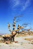 Tiro al azar en Cappadocia Fotografía de archivo