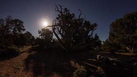 Tiro ancho de la salida de la luna con la sombra móvil de árboles almacen de metraje de vídeo