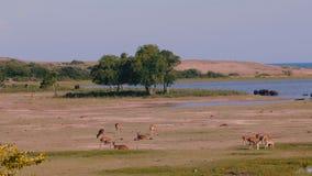 Tiro ancho panorámico que sorprende, varios grupos animales salvajes en hábitat natural en el paisaje de la sabana del parque nac metrajes