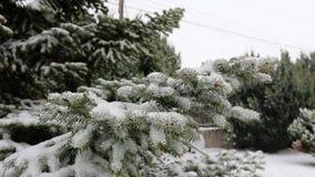 Tiro ascendente cercano de las ramas del árbol de abeto cubiertas en nieve Cámara lenta almacen de metraje de vídeo