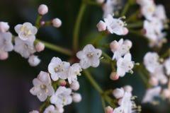 Tiro ascendente cercano de una flor hermosa en el jardín fotos de archivo