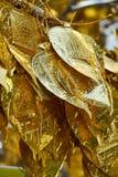 Tiro ascendente próximo da árvore tailandesa tradicional com a folha dourada para a doação no templo de Chang Mai, Tailândia fotografia de stock royalty free