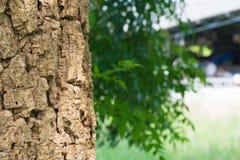 Tiro ascendente próximo de uma textura velha da casca de árvore foto de stock