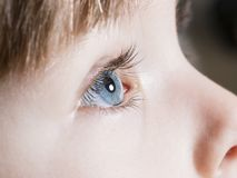Tiro bonito do macro dos olhos azuis Fotografia de Stock