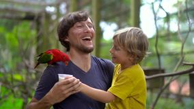 Tiro a cámara lenta estupendo de un padre y de un hijo en un parque del pájaro alimentar un loro rojo que asiste en el hombro del almacen de metraje de vídeo