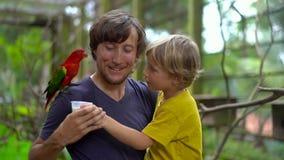 Tiro a cámara lenta estupendo de un padre y de un hijo en un parque del pájaro alimentar un loro rojo que asiste en el hombro del metrajes