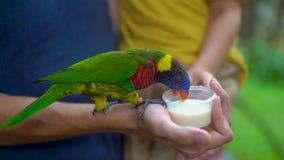 Tiro a cámara lenta estupendo de un padre y de un hijo en un parque del pájaro alimentar un loro verde que se sienta en la mano d almacen de video