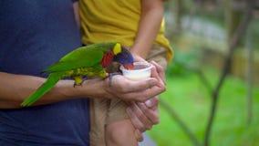 Tiro a cámara lenta estupendo de un padre y de un hijo en un parque del pájaro alimentar un loro verde que se sienta en la mano d almacen de metraje de vídeo