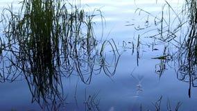 Tiro, cantidad de un lago escénico en el verano, movimiento de la diapositiva almacen de metraje de vídeo