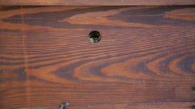 Tiro cercano de las abejas de la miel que sacan de colmena de la abeja almacen de video
