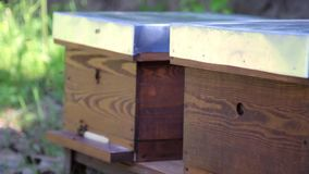 Tiro cercano de las abejas de la miel que sacan de colmena de la abeja almacen de metraje de vídeo