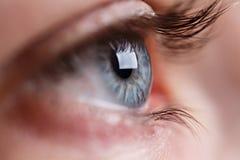 Tiro cinzento do macro do olho Fotografia de Stock Royalty Free