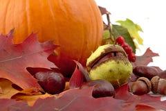 Tiro colhido da abóbora com as folhas de outono para o dia da ação de graças no branco Fotografia de Stock Royalty Free