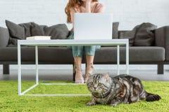 tiro colhido da mulher que trabalha com portátil quando seu gato que encontra-se no assoalho no primeiro plano imagem de stock royalty free