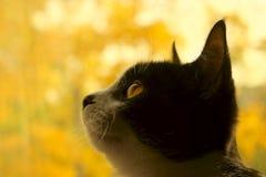 Tiro colhido de um gato preto Foto de Stock
