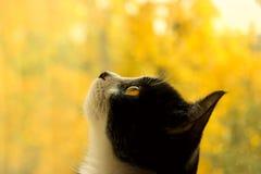 Tiro colhido de um gato preto Foto de Stock Royalty Free