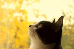 Tiro colhido de um gato preto Imagem de Stock