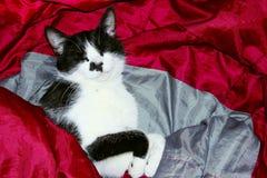 Tiro cosechado de un gato negro Primer del gato imagen de archivo libre de regalías