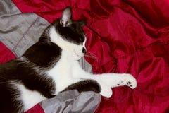 Tiro cosechado de un gato negro Primer del gato imagen de archivo