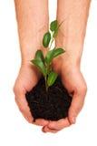 Tiro da árvore nas mãos Imagem de Stock Royalty Free
