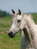 Tiro da cabeça de cavalo Foto de Stock Royalty Free