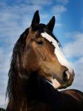 Tiro da cabeça de cavalo do louro Fotografia de Stock